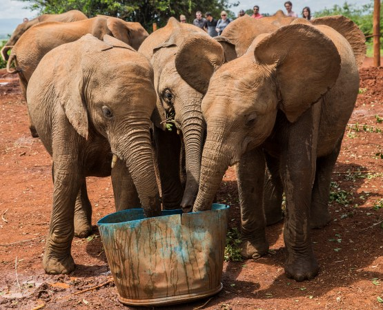 elephant orphans sharing water