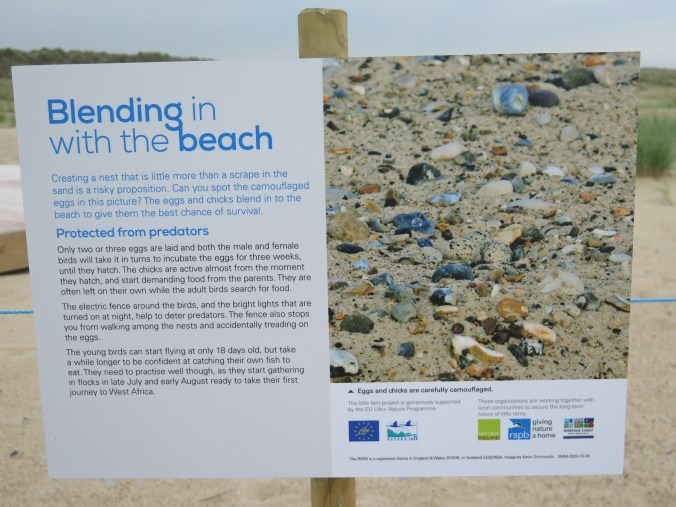 RSPB little tern sign Winterton