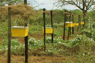 Image showing beehive fence protecting crops
