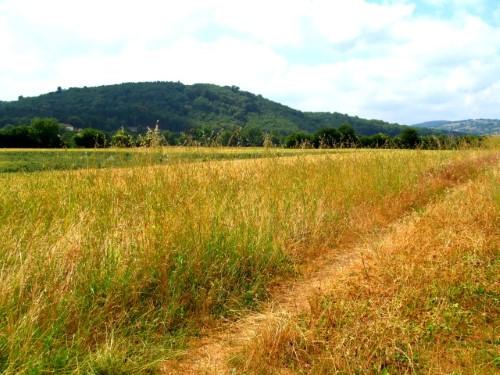 A well worn path through a dry field