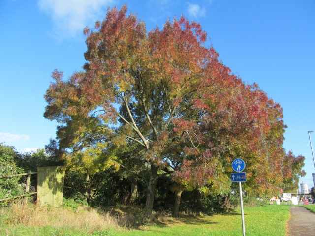 Gorgeous autumn colours right next to a busy road