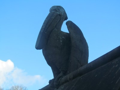 Lofty and haughty - Cardiff's oldest pelican