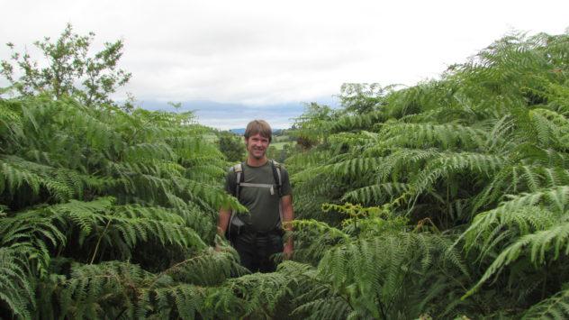 Overgrown bracken, Black Mountains, Brecon Beacons National Park, Harri Garrod Roberts