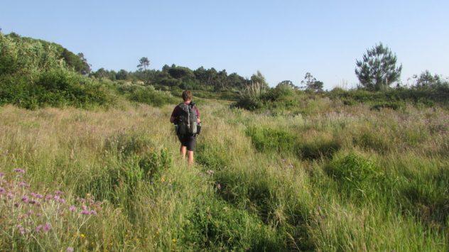 Overgrown land in Lisbon