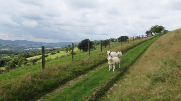 Sheep, Wales The grassy lane would have once linked the Crossing from the Sirhowy and Rhymney valleys