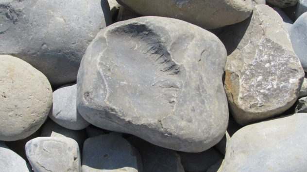 Fossil, Glamorgan Heritage Coast, South Wales
