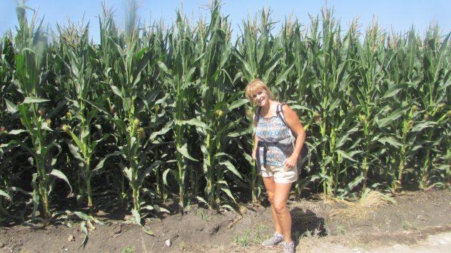 Corn, Padul, Lecrin Valley, Granada