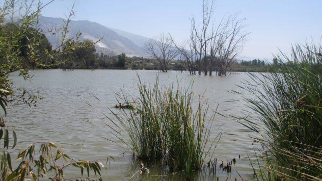 Lagoon, Padul, Lecrin valley, Granada