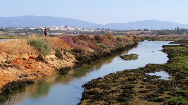 Saltmarsh, PR1 A Rocha Delicada, Rio de Alvor, Western Algarve, Portugal
