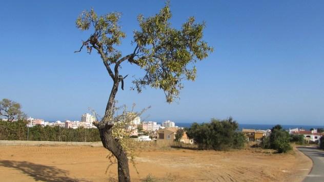 Armação, Algarve, Portugal