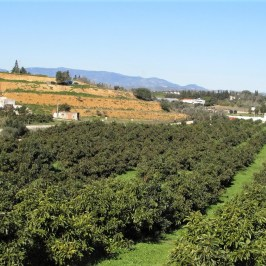 Fruit plantations near Silves, Algarve