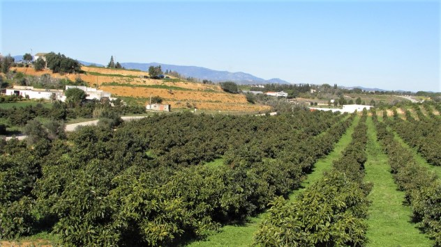 Fruit plantations near Silves, Algarve