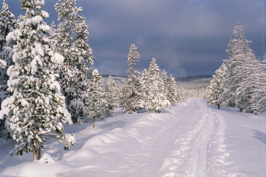 Snowy Ski Trail and Trees