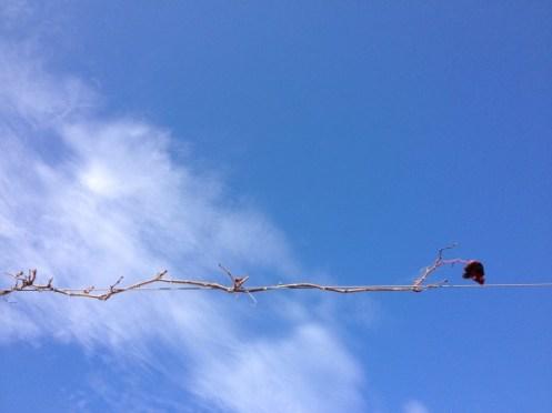 leaf // wire // sky