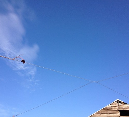 leaf // wire // sky // roof