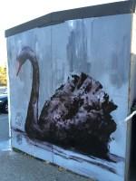 Swan-in-Swanbourne