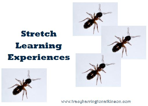 Stretch Learning Experiences