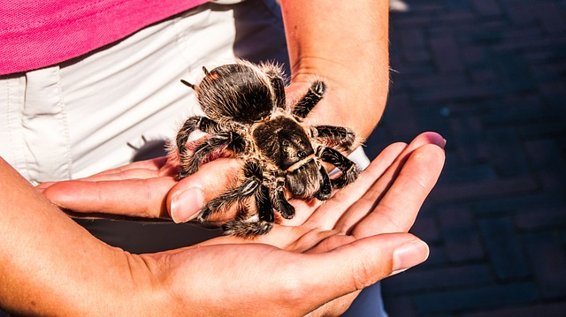 Hold the Tarantula. Shift Your Fear.