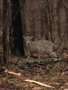 walk in the woods 1-12-2013 016