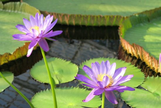 Kew gardens 1