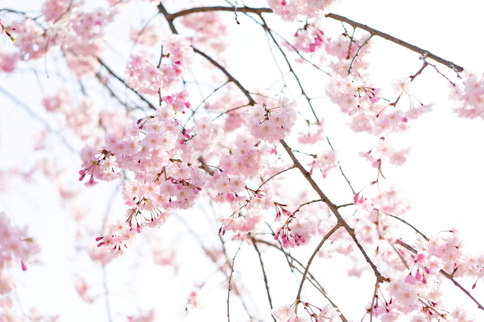 4月といえば?|風物詩・行事・記念日・食べ物・言葉