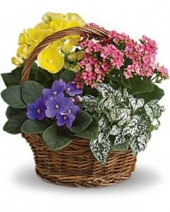 Flowerz N More