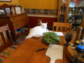 Boo the cat likes to participate in cooking activities