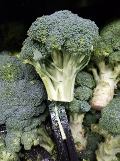 broccoli gardening Broccoli is a nutritious vegetable, high in dietary fibers, vitamins and minerals