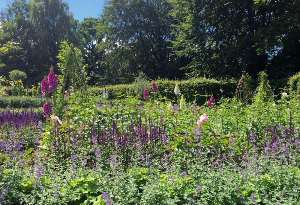 Utställningsträdgården med bland annat luktpion, luktärter och stäppsalvia av Susie White i Jonsereds trädgårdar