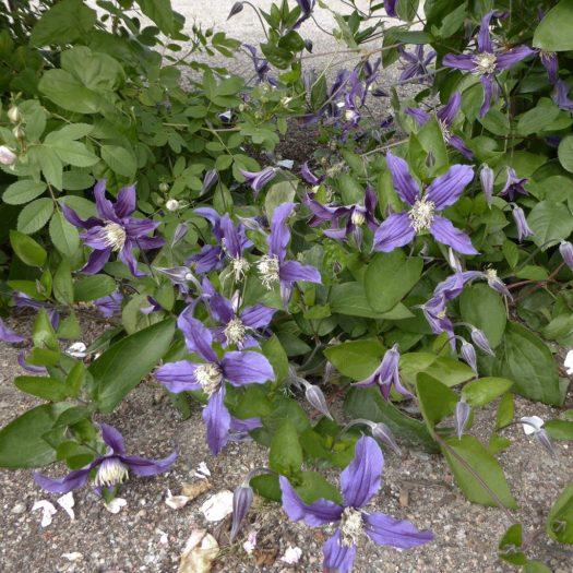 'Blue Sensation'