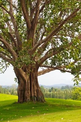 Les Arbres Ne Montent Pas Jusqu'au Ciel : arbres, montent, jusqu'au, Action, Peut-elle, Monter, Jusqu'au