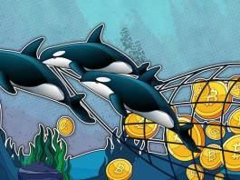 TOP důvod, proč Bitcoin bullrun nekončí! Velryby zase ve velkém nakupují