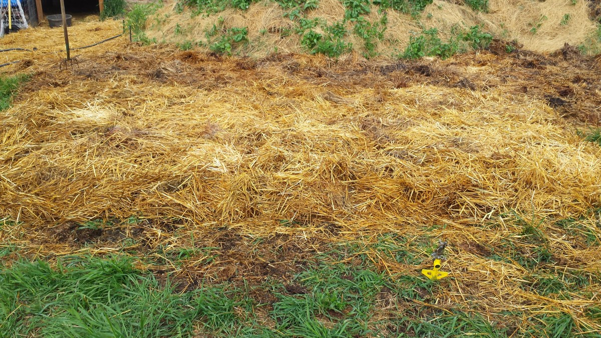 Ruth Stout no till garden mulched bed