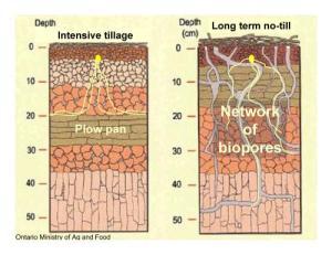 Soil horizons till vs. no-till