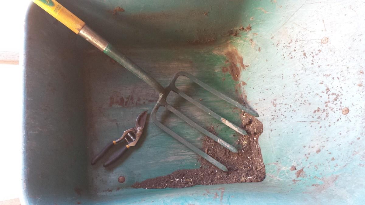 Comfrey root propagation