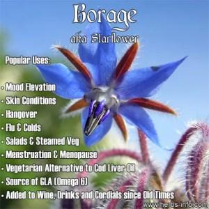 Many uses of borage