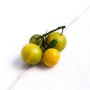 Kumquat (ส้มจี๊ด)