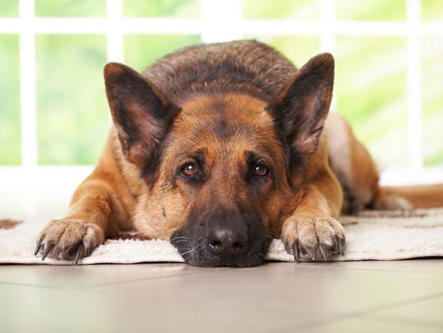 usted quiere hablar con su perro