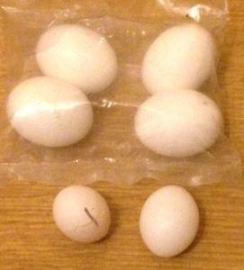 Comparison of egg sizes