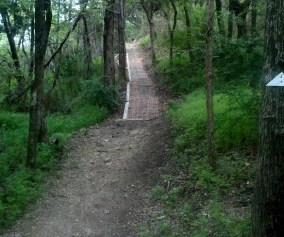 Big Cedar Trail