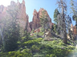 picture of red cliffs and towering pines along bryce 100 course