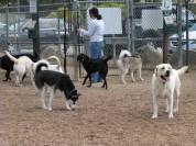 2-B&W-dogs0123