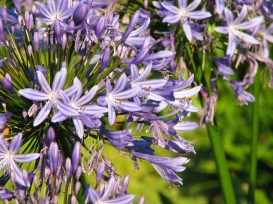 flowers1053