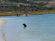 two paddlers dog in water