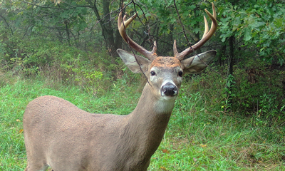 Buck Names – TrailCamTrophies