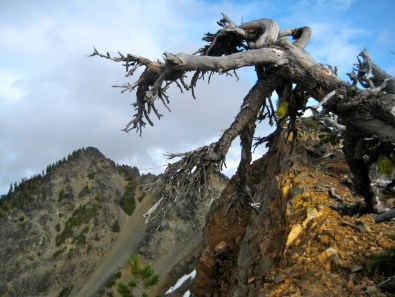 Big American Peak With Snag