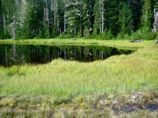 Three Lakes Meadow