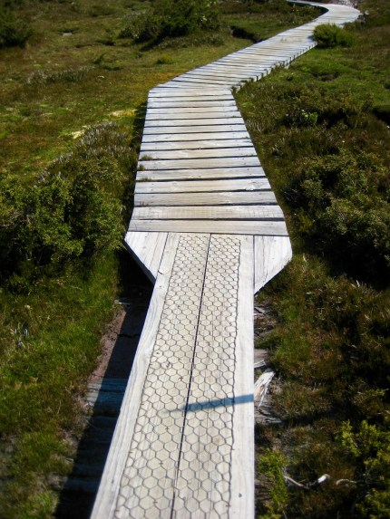 Plank To Duckboard Transition On Overland Track