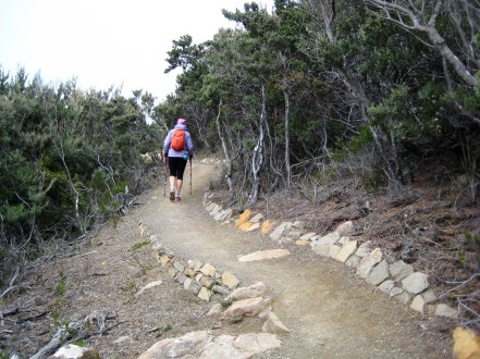 Earthen Trail Thru Heathland On Cape Pillar