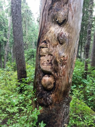 Face Tree On Chilliwack Trail